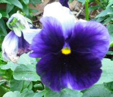 Blue Flower by Daato-Omata