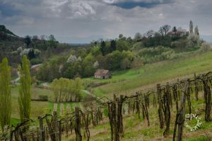 Hiking along the surrounding wine roads by XanaduPhotography