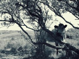 just a cow sheltering in a tree by ARAart