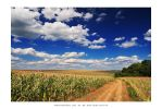 July in Oroszlo' - I by DimensionSeven