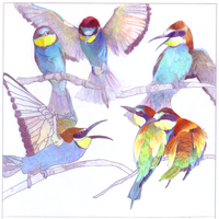 A Study in Bee Eaters by MeelaDot