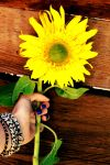 Sunflower by Sparks30122