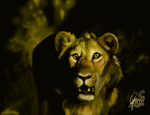 Young Lion Speedpainting by ArtistMaz