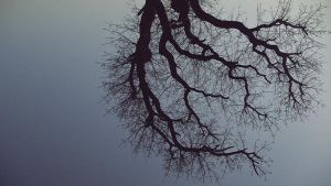 style of tree by Photographis