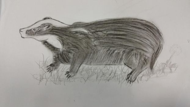 badger by Hmcmurray