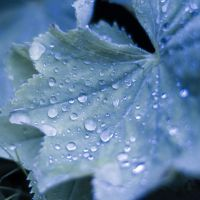 droplets by DeborahBeeuwkes