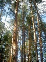 Skyhigh trees by Evanescent-beauty