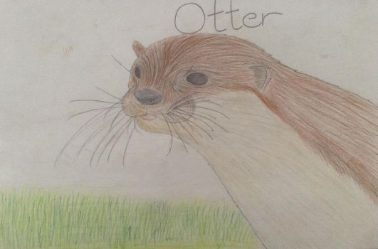 Otter 1 by WinterWolfDragon