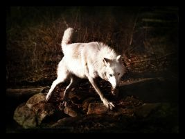 Atka's Domain by causticxace