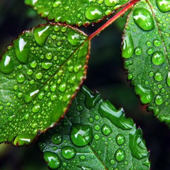 leafs after rain by augenweide