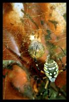 spider web by matinee