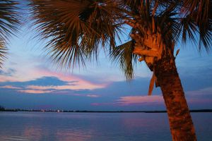 Colorful Sky Bay Palm Tree by PhotonicBohemian