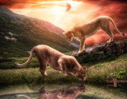 Lioness by AIvett