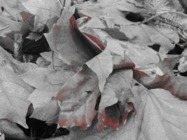 Leafs or Darkness then Redness then Whiteness by Skystone99
