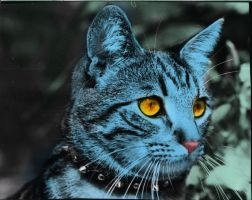 It's a Blue Cat by HorseElena