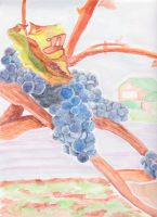Grape and Vineyard by zolicon