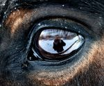 in the eye by collien