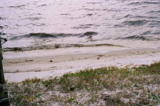 Florida Doesn't Have Dirt by Purplecherry5