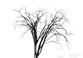 Elm by Apothacer
