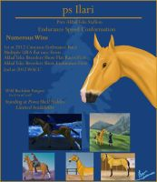 ps Ilari stud poster by byrch