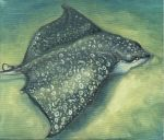 Spotted Eagle Ray by milosmilos