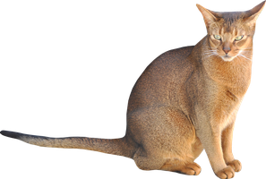 stock sitting cat png by MeinLilaPark