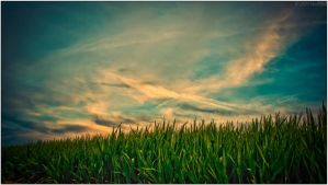 Wheat and Sky by HarDMuD
