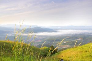 Mist at Broga Hill by puppydogpoo