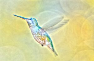 Waterspotted hummingbird by kayaksailor