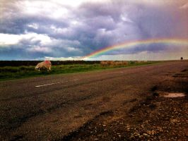 Rainbow, sheep = countryside drive home by Sydney0007