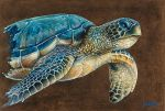 SEA TURTLE ON BRONZE BACKROUND by Gallery-of-Art