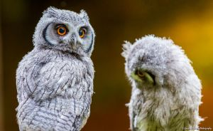Scottish Owl Centre 04 by fatgordon0