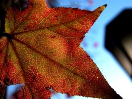 Autumn Leaf 2 by jayshree