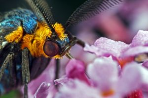 Virginia Ctenucha Moth II by lord-creeper