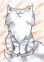 funny proud maine coon cat ACEO by KingZoidLord