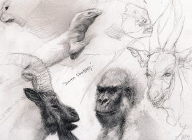 Animal sketches by LindseyWArt