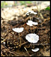 White Little Things by krishnachandranu