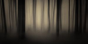 Ghost Forest by megpie60