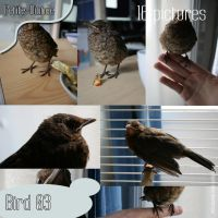 Bird 03 by Petite-Dionee