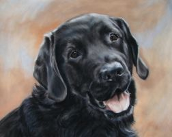 Black lab Max by Eline-portraits