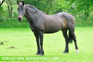 Seal Brown Friesian Mix 9 by Indian-Ink