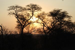 African Bush Sunset1 by Mouseymeg