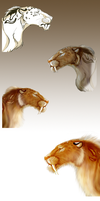Smilodon WIP by Cici-R