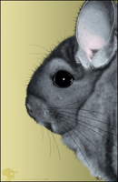 Chinchilla by Nioell