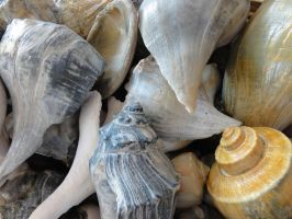 Shells 3 by Ox3ArtStock