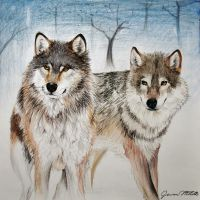 Wolves by Jaylynessa