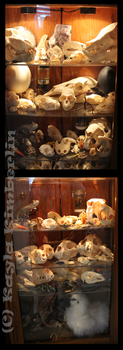 Curiosity Cabinet by BluesCuriosities