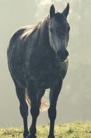 Horse_Vintage II by fuel2water