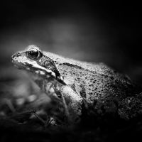toad by indojo