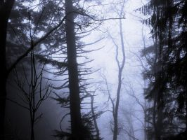 Forest with mist by JWLTR
